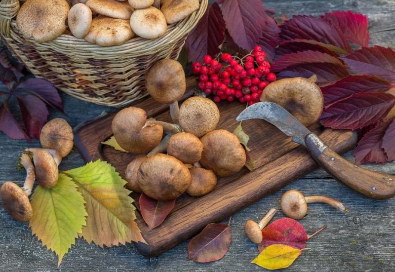 Что нужно знать о осенних грибах